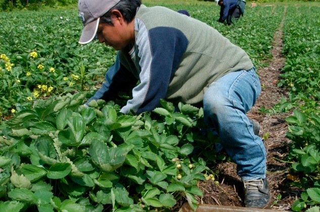 Les agriculteurs de la région sont sur le qui-vive depuis que le  gouvernement... (Photothèque Le Soleil)