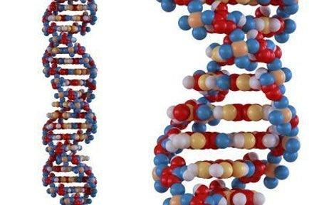 Produit de la nature ou résultat d'une découverte scientifique, l'ADN humain... (Photo: Mopic)