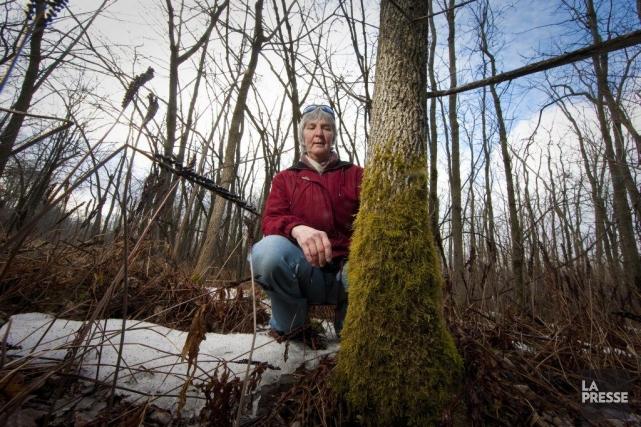 Madeleine St-Aubin se tient là où le boisé... (Photo André Pichette, La Presse)