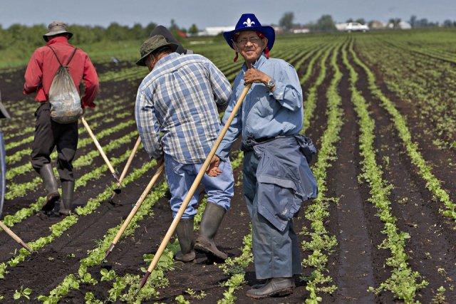 Des travailleurs guatémaltèques dans une exploitation agricole du... (Photo Patrick Sanfaçon, La Presse)