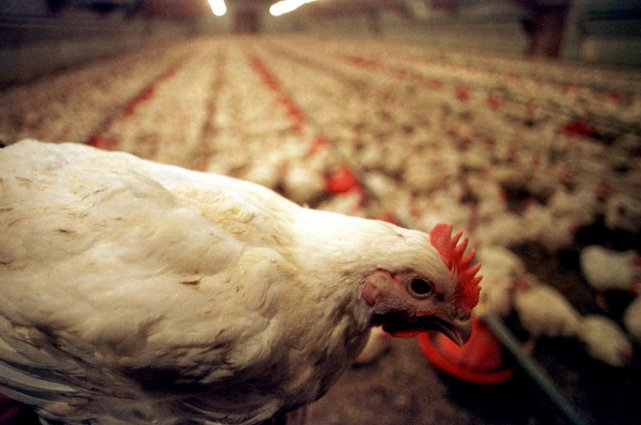 L'utilisation de cinq agents antimicrobiens est actuellement autorisée... (Photo archives AP)