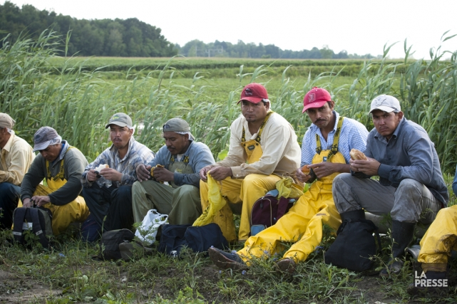 Quand ils rentrent chez eux, au terme d'une saison dans les champs québécois,... (Photo Ninon Pednault, La Presse)