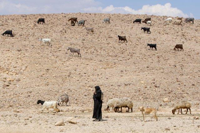 Une Bédouine garde un troupeau de chèvres dans... (PHOTO ALAIN ROBERGE, ARCHIVES LA PRESSE)