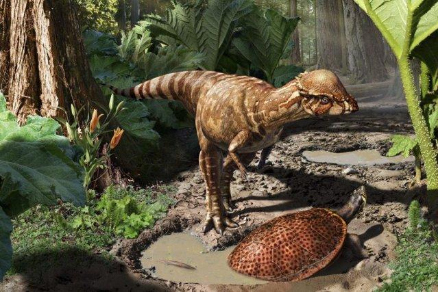 D couverte d 39 une nouvelle esp ce de petit dinosaure d couvertes - Liste de dinosaures ...