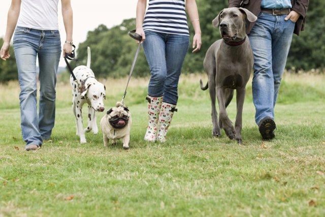 Le succès des «blogues à pattes» sur les animaux de compagnie est tel  aux... (PHOTOTHÈQUE LA PRESSE)