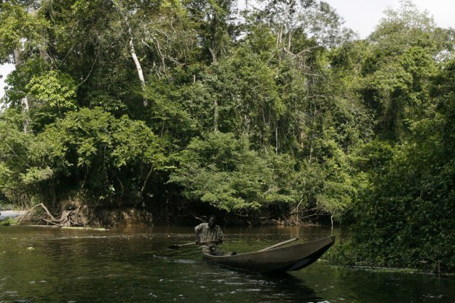 Fôret de la Côte d'Ivoire... (PHOTO KAMBOU SIA, ARCHIVE AFP)