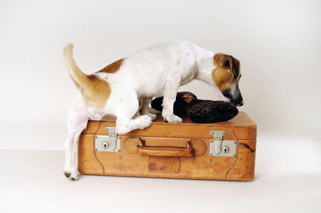 Voyager à travers l'Europe avec des animaux de compagnie va devenir plus ... (PHOTOTHÈQUE LA PRESSE)