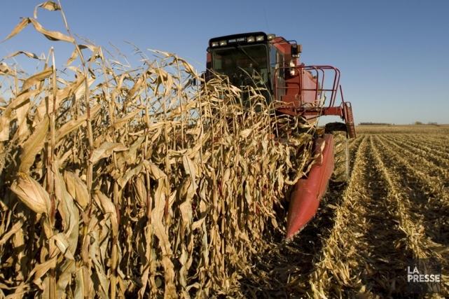 Une moissonneuse-batteuse dans un champ de maïs près... (Photothèque Le Soleil)