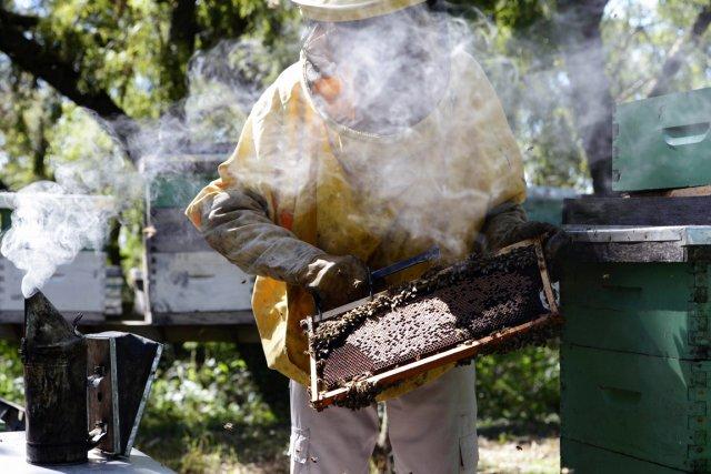 La Fédération des apiculteurs demande à l'Agence de... (PHOTO JUAN MABROMATA, AFP)