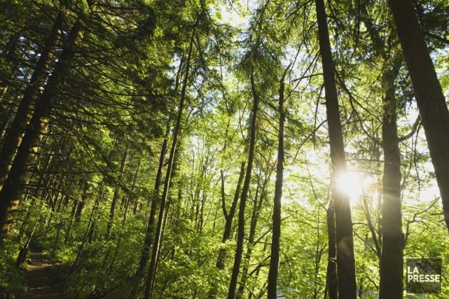 Les réserves de biosphère sont choisies en vue... (PHOTOTHÈQUE LA PRESSE)