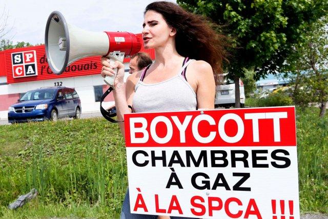 La trentaine de manifestants ont été bruyants, mais... (Simon Séguin-Bertrand, LeDroit)