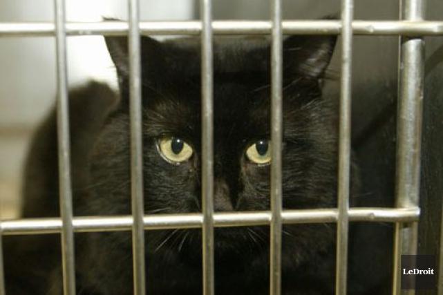 La SPCA de Montréal a procédé mardi à la saisie de plus de 36 chats et 57... (PHOTO ARCHIVES LE DROIT)