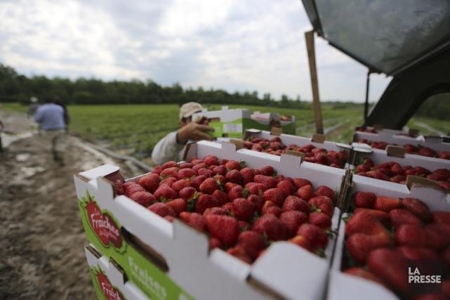 La Financière agricole du Québec rapporte mercredi dans... (Photo Martin Chamberland, La Presse)