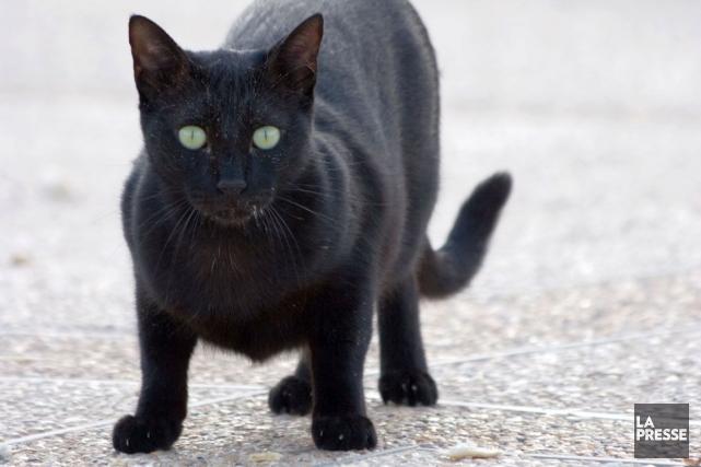 Un chat qui s'est infiltré sur un navire porte-conteneurs effectuant une... (Photo archives La Presse)
