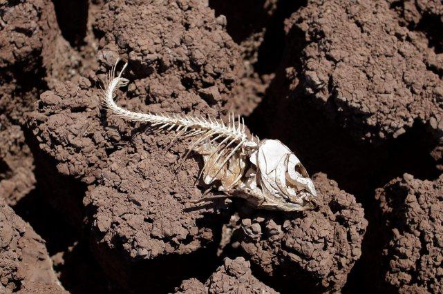 Le Golfe du Mexique pourrait voir se former cette année une «zone morte» - où... (PHOTO ARCHIVES AP)