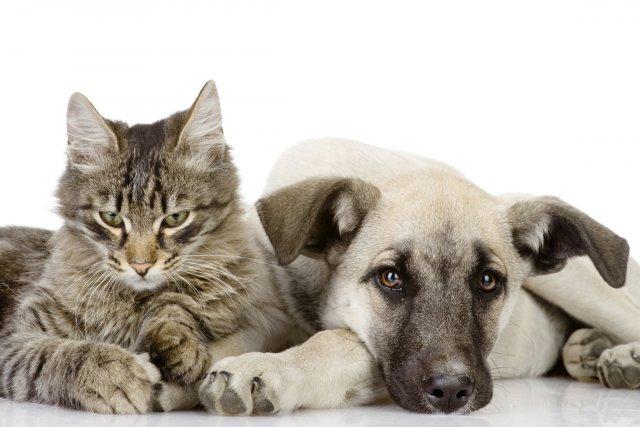 Un chien ou un chat qui souffre de... (Photothèque Le Soleil, Steve Deschênes)
