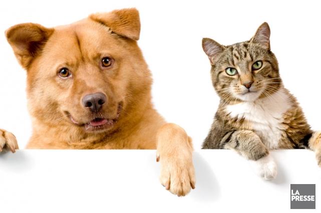 un permis sera exig pour garder 15 chats ou chiens lia l vesque animaux. Black Bedroom Furniture Sets. Home Design Ideas