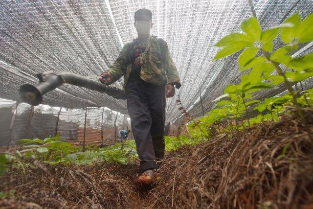 Huit pesticides décelés dans les herbes vendues au... (PHOTO ARCHIVES GREENPEACE)