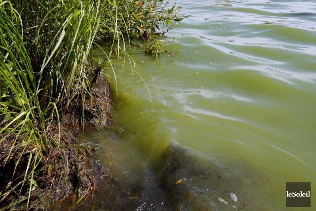 Algues bleu-vert... (Photothèque Le Soleil)