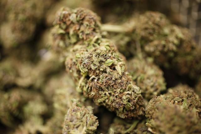 Une recherche de marijuana s'est rapidement transformée en recherche d'emploi... (Photo: AP)