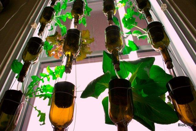 La compagnie BioCité a conçu, à partir de... (Photo fournie par BioCité)