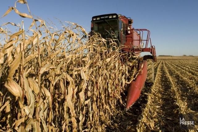 Alors que le nombre de fermes diminue au Canada, leur taille augmente et leurs... (Photo Robert Skinner, Archives La Presse)