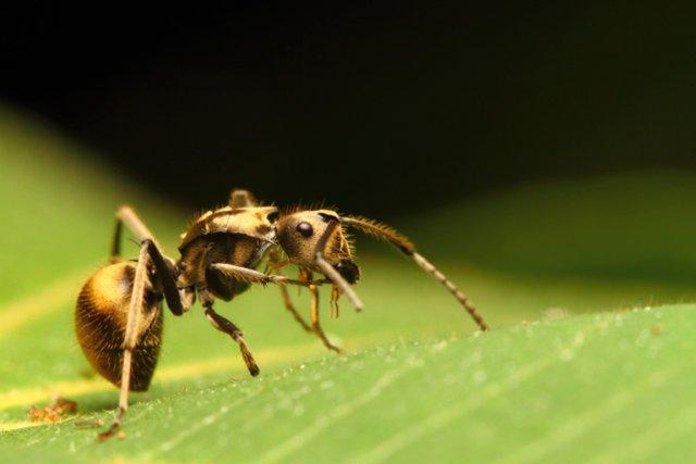 Comme dans un couple, la cohabitation entre un animal et sa plante hôte peut... (PHOTO FOURNIE PAR PHOTOS.COM)