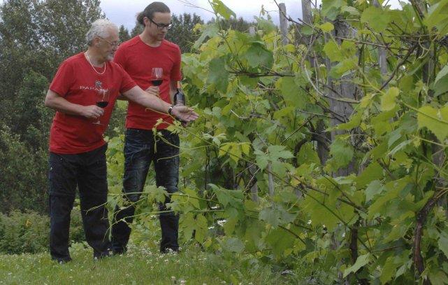 Peu de gens savent qu'une vigne centenaire est... ((Photo Michel Tremblay))