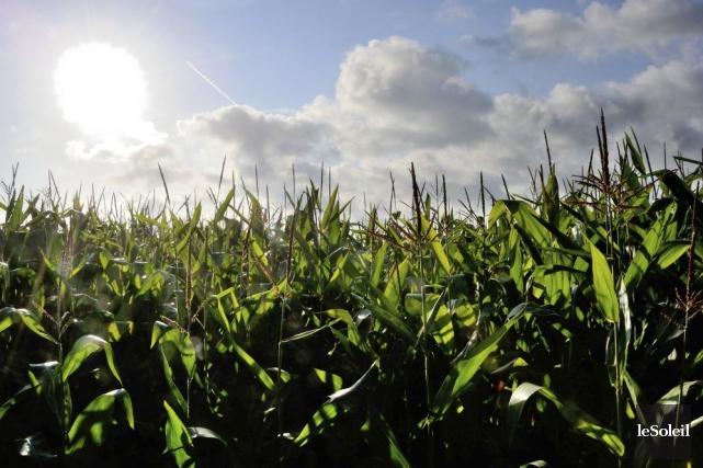 Monsanto, qui est établie à St. Louis, produit... (Photothèque Le Soleil)