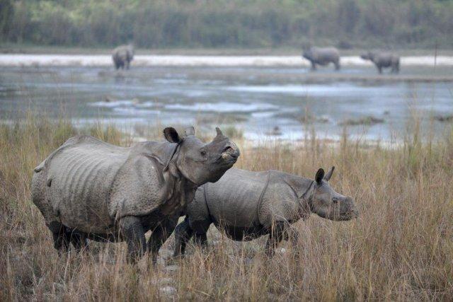 L'Afrique du Sud abrite plus de 20 000... (PRAKASH MATHEMA)