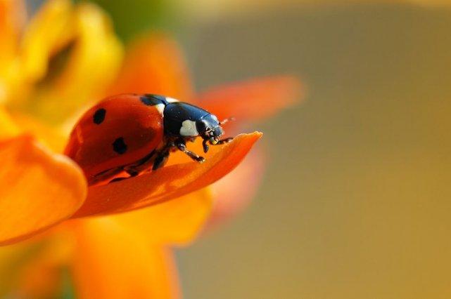 Les insectes une alternative bio pour se d barrasser des - Se debarrasser des pucerons ...