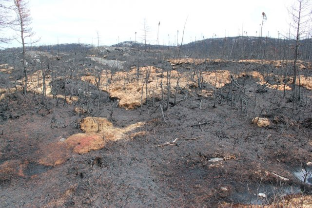 Si les incendies qui ont dévasté quelque 600... (Photo fournie par la municipalité de Baie-Johan-Beetz)