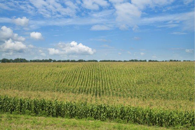 La vente presque systématique de semences enrobées de pesticides de la classe...