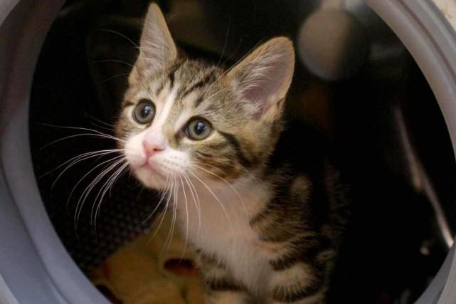 Le chaton disparu d'une femme du Nouveau-Mexique a été retrouvé dans le Maine,... (Photo archives AP)