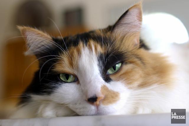 Des poils de chat ont été retrouvés sur... (PHOTOTHÈQUE LA PRESSE)