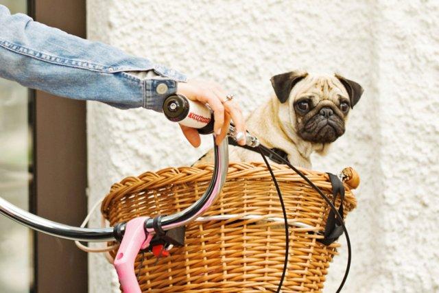 Vous cherchez un bon moyen de faire de l'exercice avec votre chien? Avez-vous... (Photos.com)