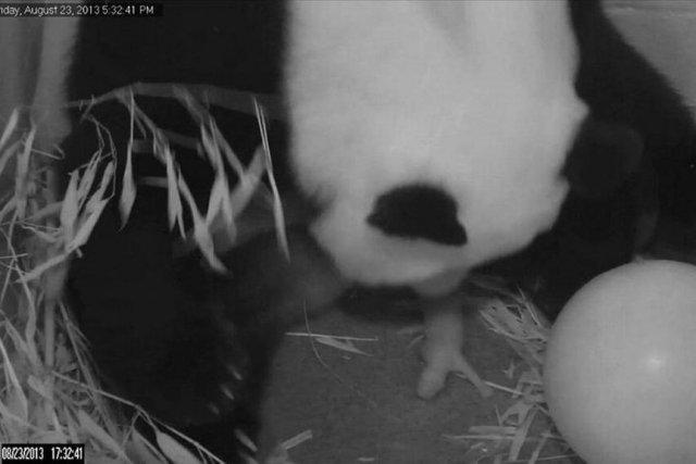 Une image de la vidéo de l'accouchement de... (Photo Reuters)