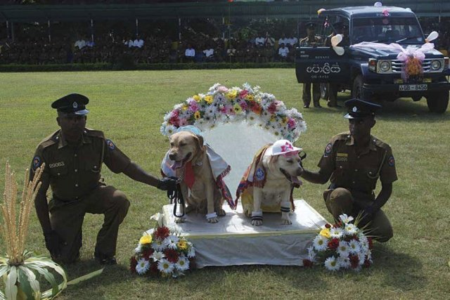 Neuf «couples» de chiens ont été unis lundi... (Photo AFP)