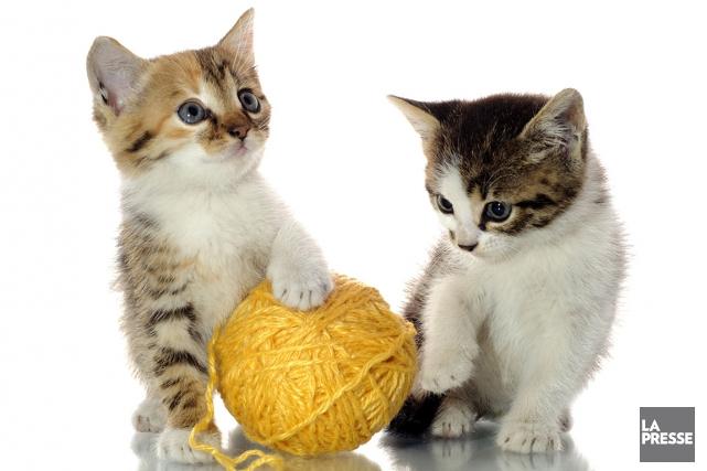 Vous pensez que votre animal de compagnie s'ennuie, ou pire, déprime lorsque... (Photothèque La Presse)