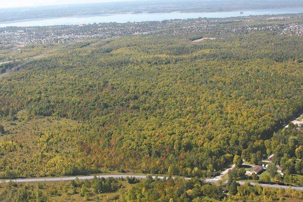 La Forêt Boucher du secteur Aylmer est désormais... (Patrick Woodbury, Archives LeDroit)