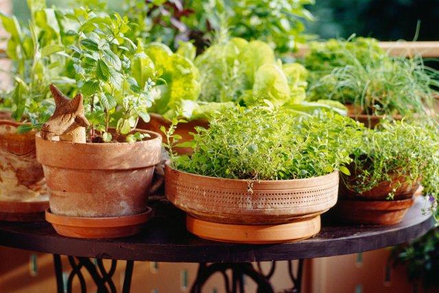 rentrer les fines herbes ou non larry hodgson horticulture