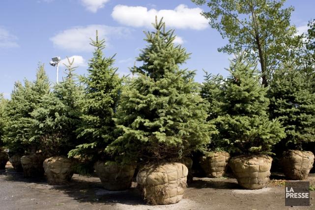 Plantation d 39 arbres vos pelles philippe boisvert jardiner - Plantation d arbres synonyme ...