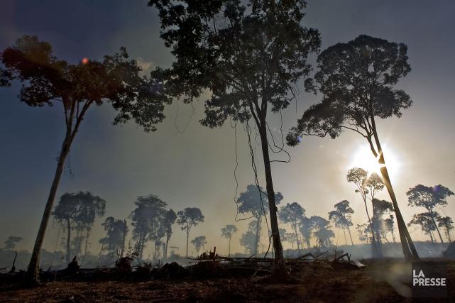 La Terre a perdu plus de la moitié... (Photo Patrick Sanfaçon, archives La Presse.)