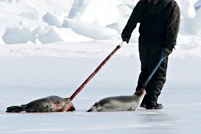 Un accord commercial visant à vendre de la viande de phoque canadienne en... (Photo d'archives La Presse Canadienne)