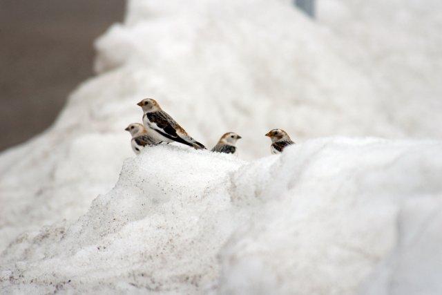 Les participants au Recensement des oiseaux de Noël... (Jacques Samson, collaboration spéciale)