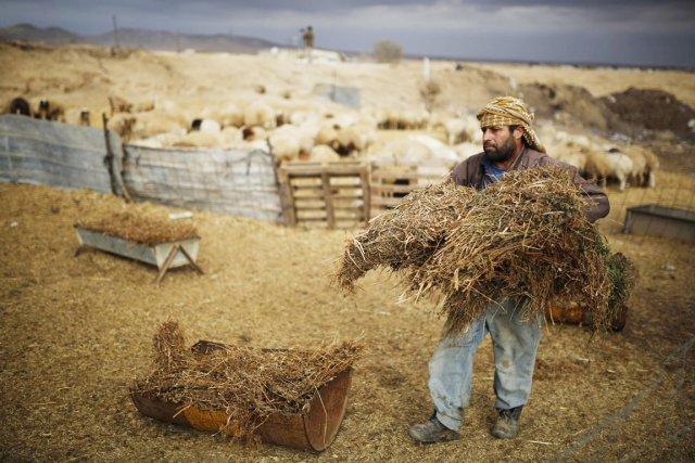 Environ 260000 Bédouins vivent en Israël, la plupart... (PHOTO AMIR COHEN, ARCHIVES REUTERS)