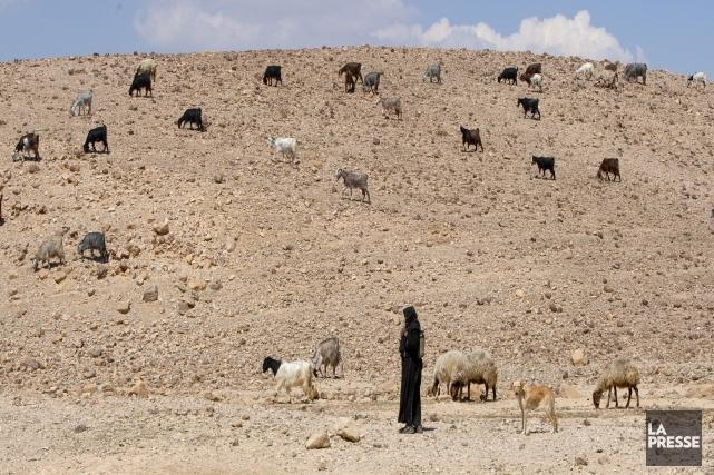 Une femme bédouine dans le désert de Néguev.... (Photo Alain Roberge, archives La Presse)