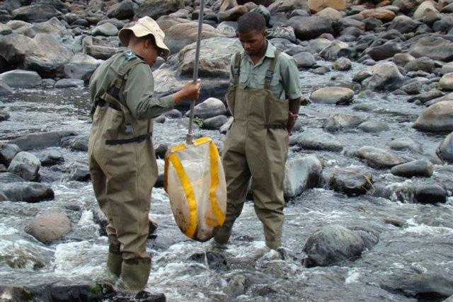 Des techniciens des Parcs nationaux d'Afrique du Sud... (PHOTO DR TONY SWEMMER, SAEON.AC.AZ, ARCHIVES)