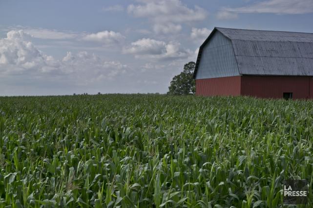 L'An 2014 sera l'année durant laquelle nous valoriserons l'agriculture... (Photo Hugo-Sébastien Aubert, archives La Presse)