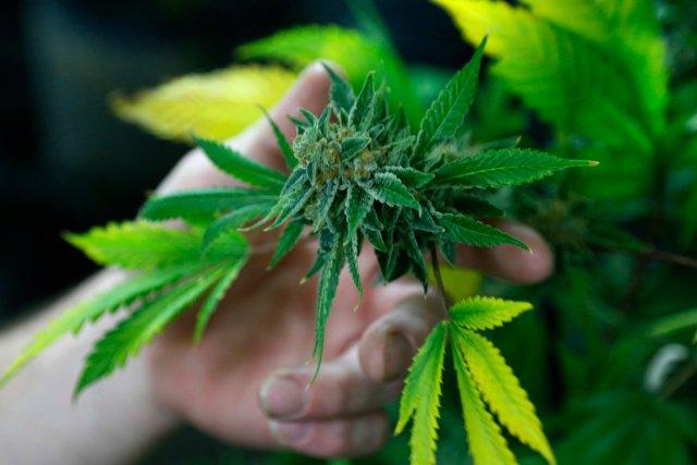 58% des Américains sont désormais pour une légalisation... (PHOTO REUTERS)